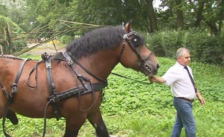 Konie tej rasy zdobywają coraz większe uznanie polskich hodowców