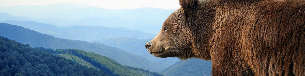Szlakiem grizzly