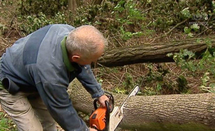 W gm. Szubin pilnie poszukiwani chętni z piłami do cięcia drzew