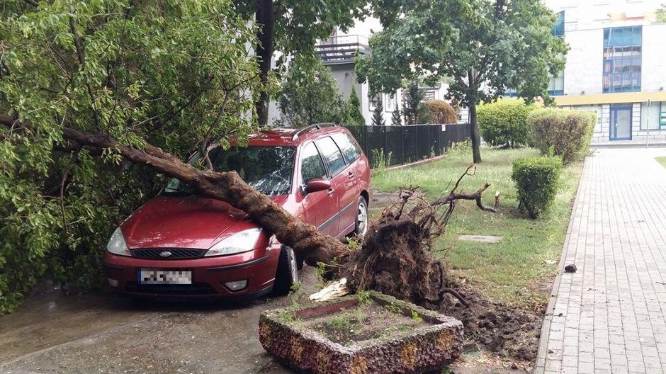 Wyrwane przez wichurę drzewo uszkodziło auto na jednej z ulic Bydgoszczy (fot. Olivia Ad)