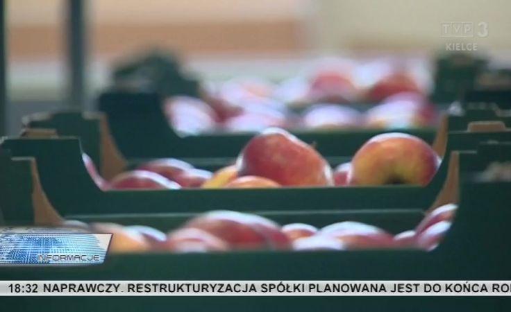 Owoc Sandomierski przed nowa szansą