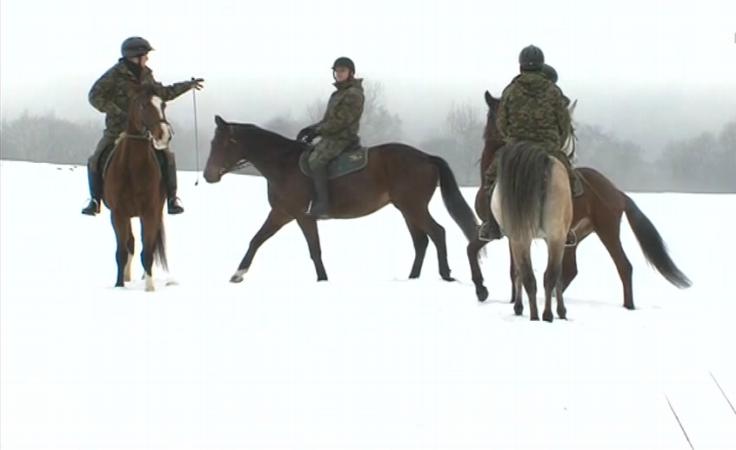 Konie na patrolu.
