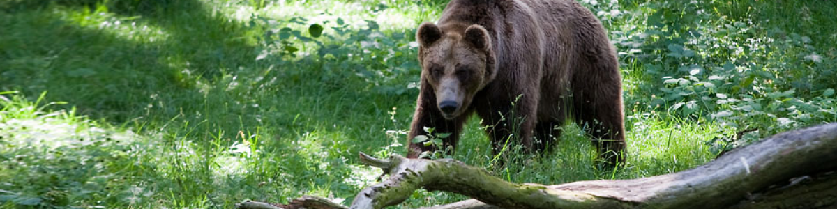 Na niedźwiedzim szlaku
