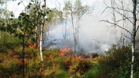 Przyczyną pożaru było podpalenie. (fot. Lasy Państwowe).