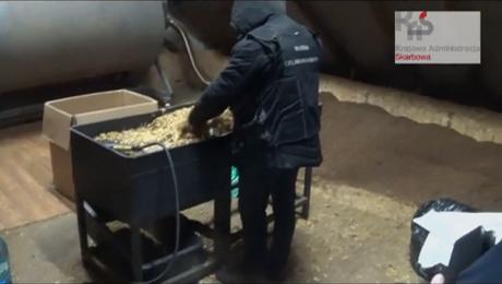 Nielegalna fabryka tytoniu. 4,5 t suszu o wartości ponad 5 mln zł