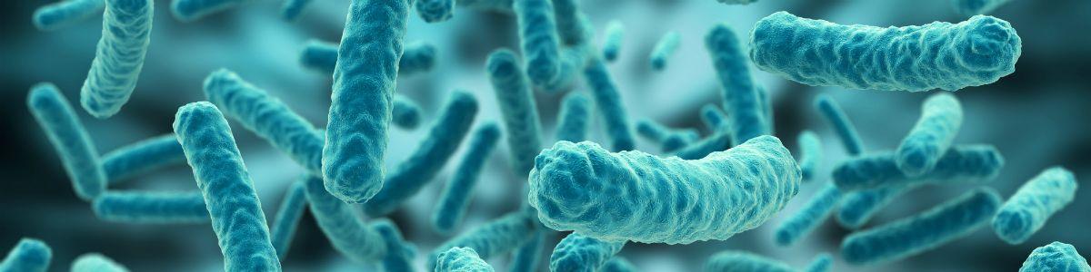 Wirusy ewolucji
