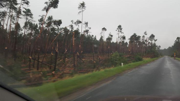 Połamane drzewa na trasie Tuchola - Legbąd (fort. Marcin Góral)