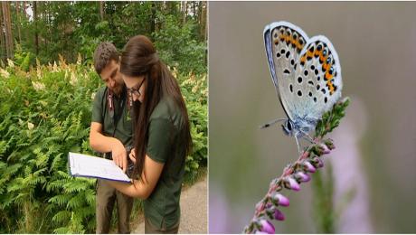 Naukowcy przygotowują atlas motyli. Badania potrwają 3 lata