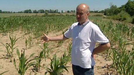 Rolniczy raport: susza pustoszy uprawy na Warmii i Mazurach