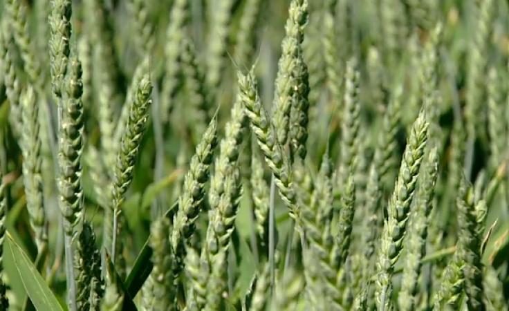 W całym kraju wnioski złożyło 97 proc. z 1,3 mln rolników