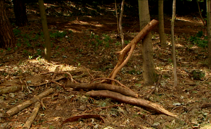 Co jest powodem wycinki drzew w pobliżu ul. Wyszyńskiego?