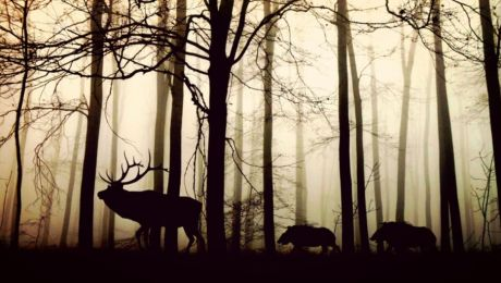 Odstrzał dzikich zwierząt w Redzikowie