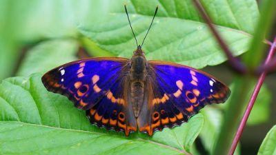Natura w Jedynce - Motyle