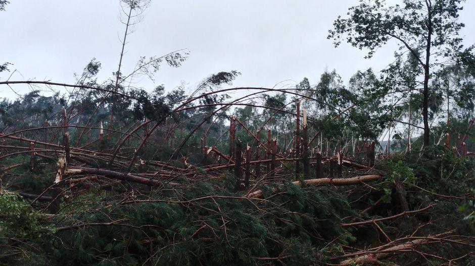 Połamane drzewo w Hucie (fot. Twoje Info/Wojciech)
