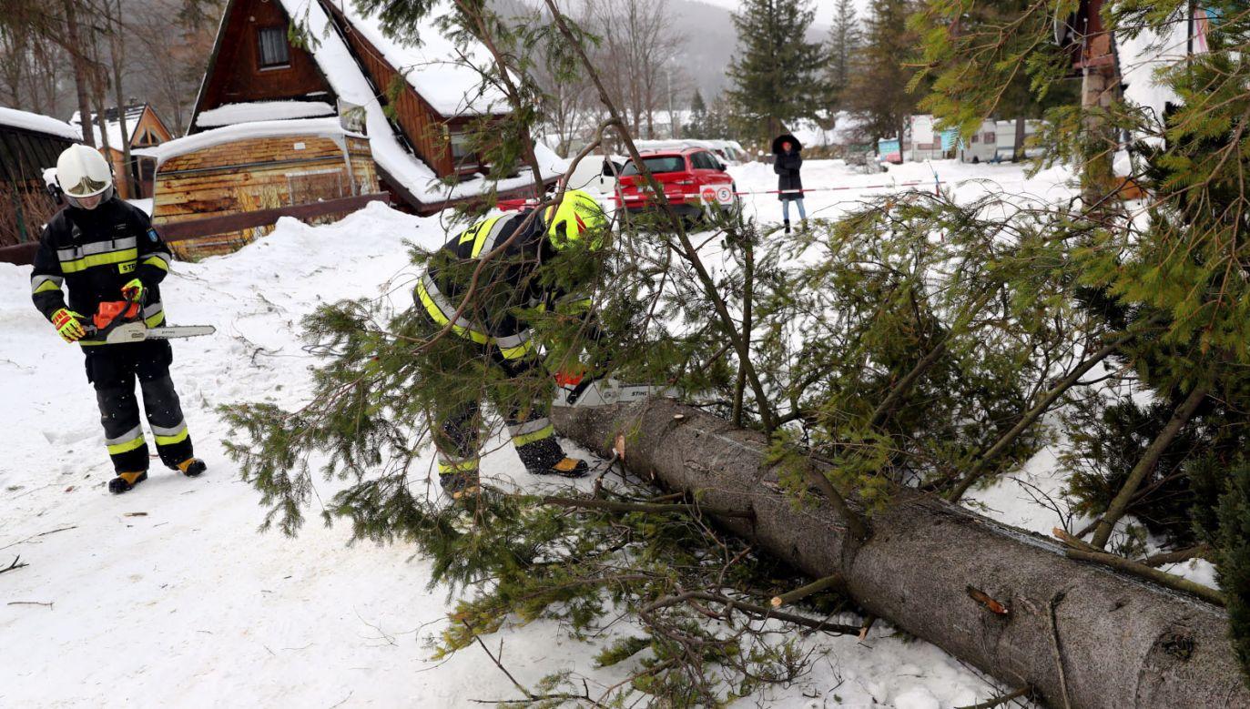 Zniszczenia spowodowane przez halny w Zakopanem (fot. PAP/Grzegorz Momot)