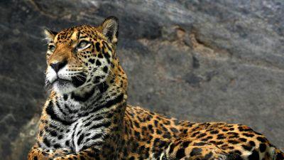 Natura w Jedynce – Dziennik z życia wielkich kotów