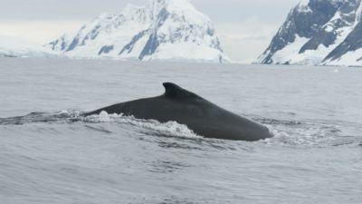 Natura w Jedynce –  Ocean Południowy