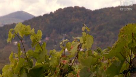 Karpacki szlak wina