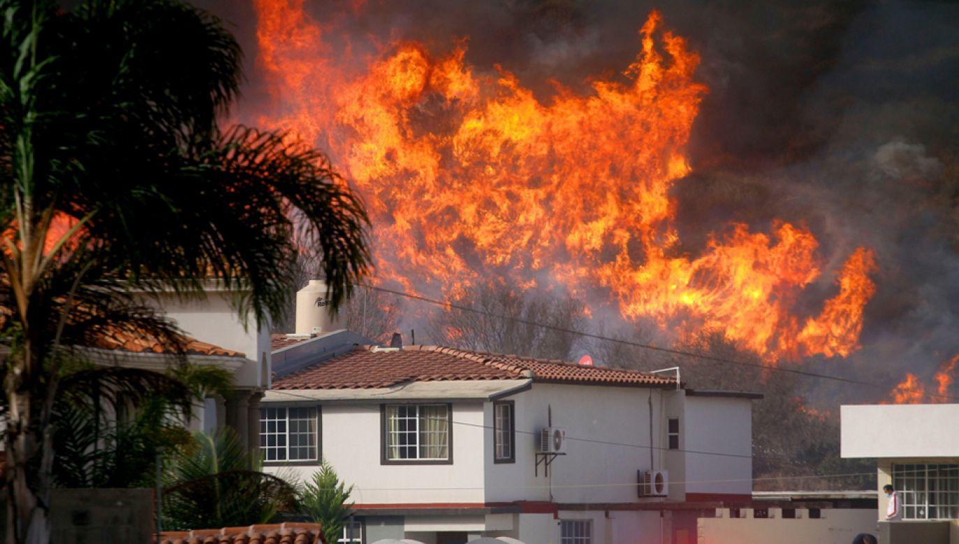 Płomienie strawiły już ponad 500 budynków (fot. PAP/EPA/Alejandro Zepeda)