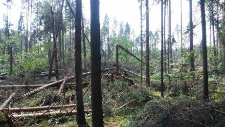 Straty sięgają ok. 10 tys. m sześc. drewna