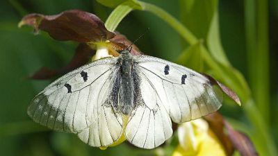 Tańczący z naturą – Czytanie motyla