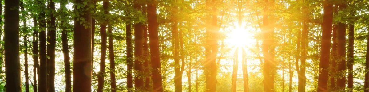 Zbawienny las
