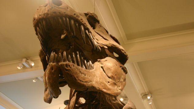 Złowrogie szczęki tyranozaura (fot.  Steve Starer)