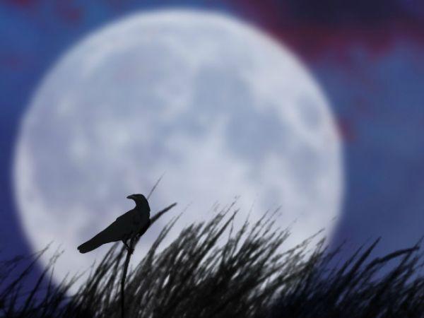 Magia trzynastego księżyca