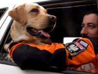 """""""Pies najszybciej i najdokładniej zlokalizuje przysypanych ludzi"""""""