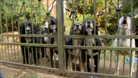 9 psów bez opieki właściciela. Mieszkańcy są zaniepokojeni