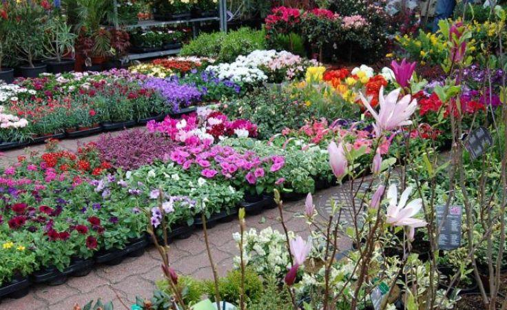 Piękne kwiaty cieszą oczy - fot. MTS