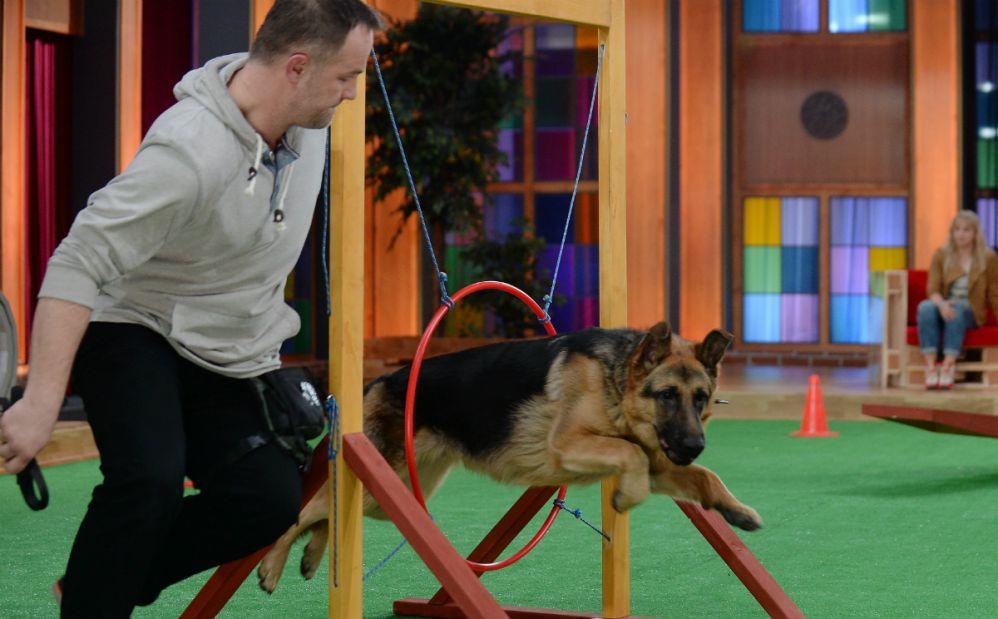 ten-pies-pokona-kazda-przeszkode-ale-tylko-jedna-skradla-jego-serce-fot-i-sobieszczuktvp