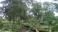 Połamane drzewa w parku w Nakle nad Notecią (Bartłomiej Wnuk)