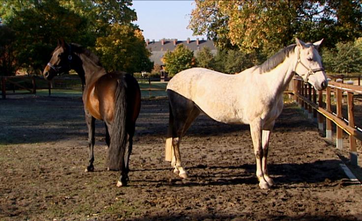 Wykładowcy z Polski rozmawiali o roli konia w kulturze