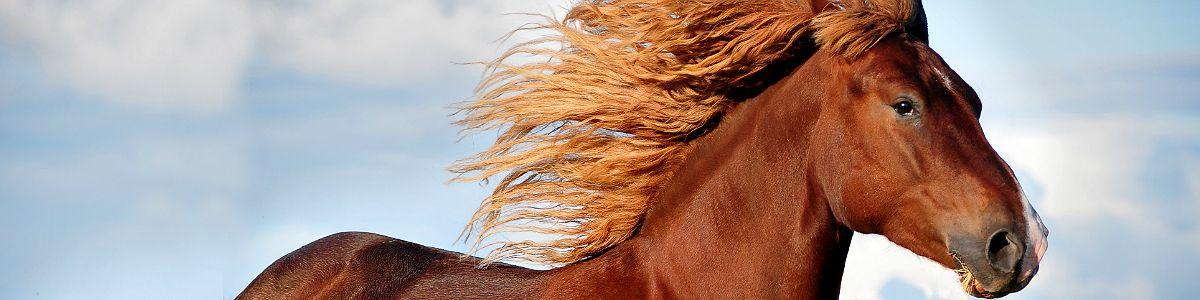 Jak oswoić konia?