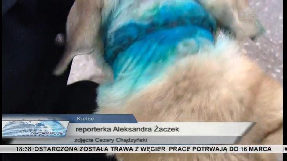 Maltretowany pies odebrany właścicielowi
