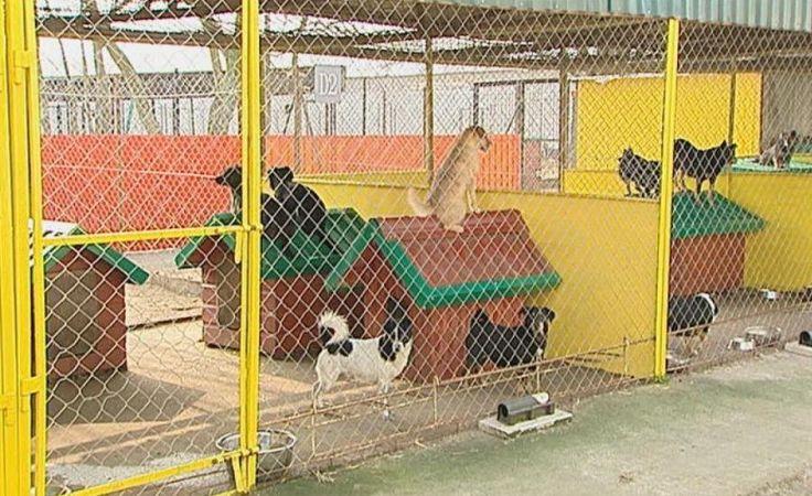 Niepokojące wyniki kontroli w schronisku dla zwierząt