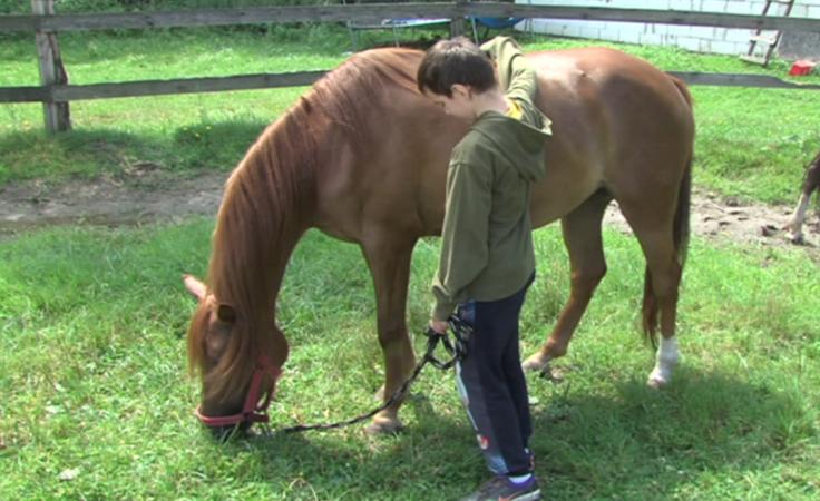 Warsztaty jeździeckie za darmo