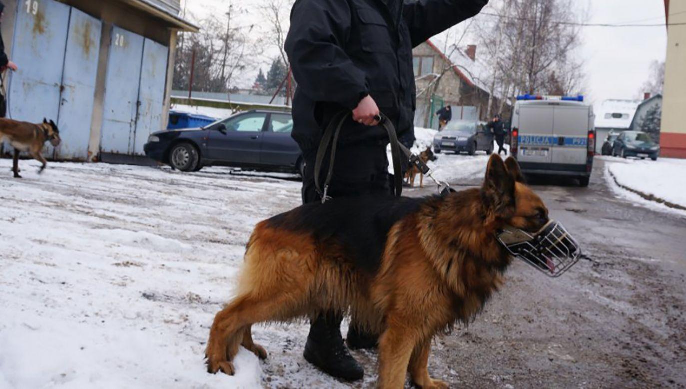 Policyjny owczarek Epo wytropił kobietę zaginioną kobietę (fot. bielsko.slaska.policja.gov.pl)