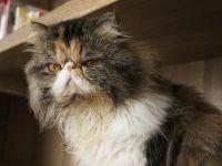 Wrażliwy kot