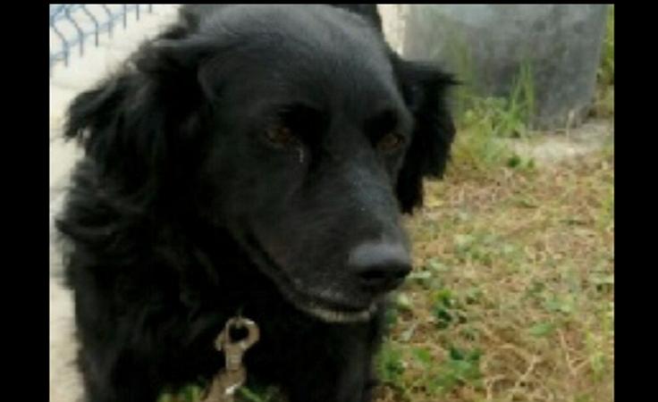 Pies przywiązany do torów. Policja szuka sprawcy
