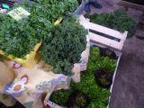 Dieta optymalna dla środowiska, dieta optymalna dla zdrowia