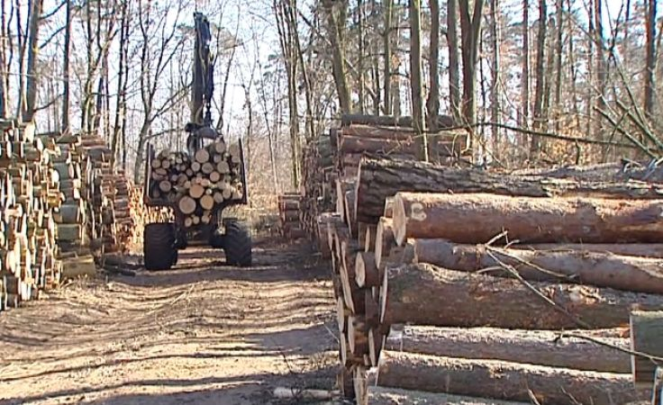 Wycinka drzew po nawałnicę potrwa do końca roku