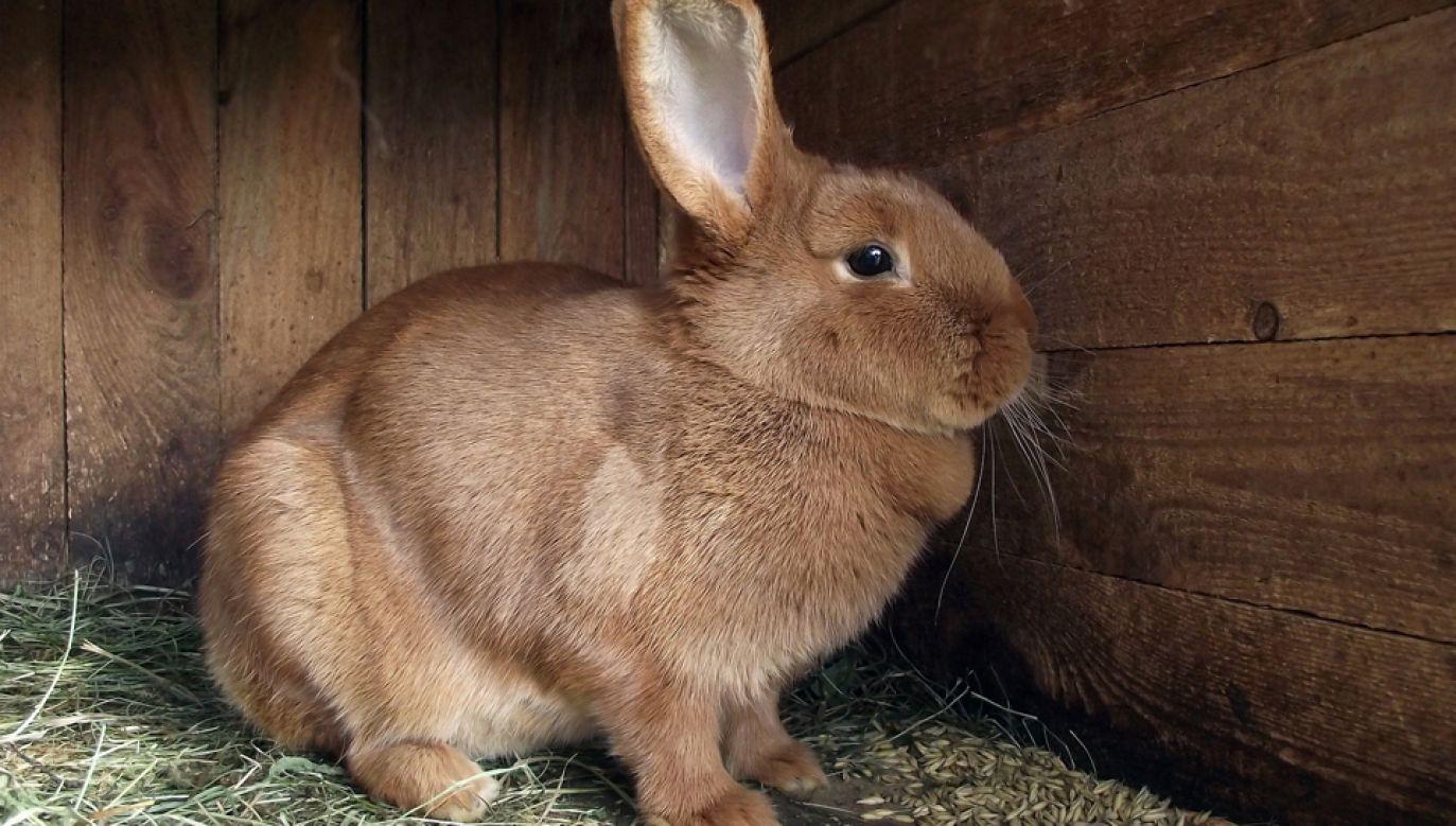 Projekt ustawy zakazuje hodowli zwierząt futerkowych (pixabay/MrGajowy3)