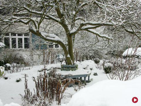 Rok w ogrodzie, 28.01.2017