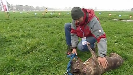 Wielka aukcja psów na Błoniach