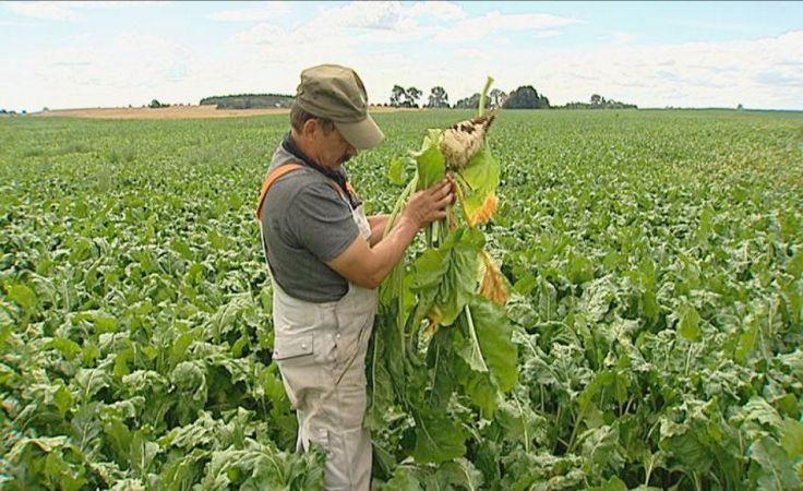 Rolnicy u premier Ewy Kopacz