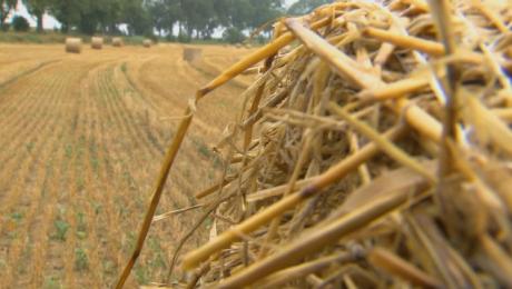 Dożynki pod znakiem suszy. Rolnicy spotkali na Mazurach