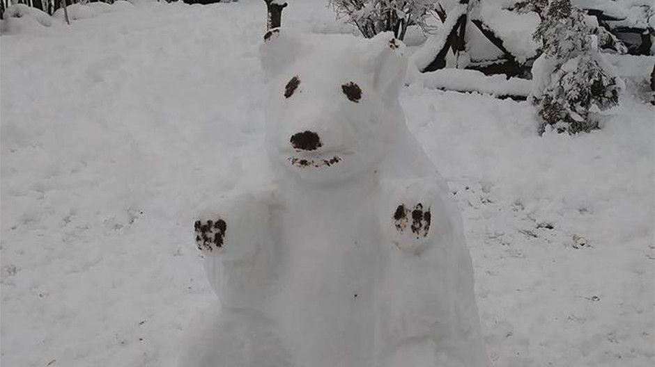 Niedźwiedź z Korczowej