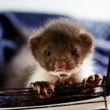 Zwierzęta pokrzywdzone przez los... (fot. M. Wąsiński)